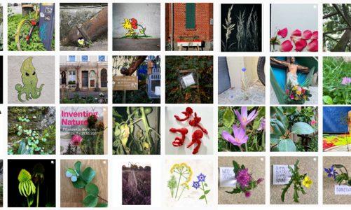 Jetzt Kunst Pflanzen. Interaktions-Impulse zu Inventing Nature der Kunsthalle Karlsruhe